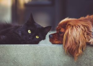 Distance Healing For Dogs & Cats